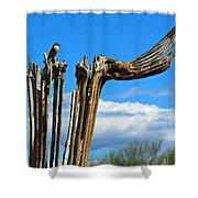 Little Bird On Tall Dead Saguaro Shower Curtain