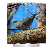 Little Birdie 2 Shower Curtain