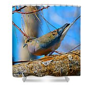 Little Birdie  Shower Curtain