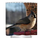 Little Gray Crested Titmouse Bird Ready For Lunch Shower Curtain