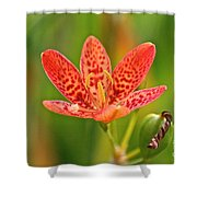 Little Blackberry Lilly Shower Curtain