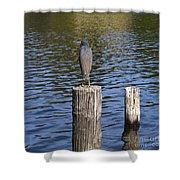 Little Blue Heron - Egretta Caerulea  Shower Curtain