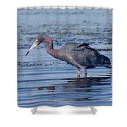 Little Blue Heron Egretta Caerulea Shower Curtain
