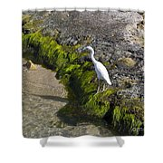 Little Blue Heron - Egretta Caerulea - White Morph Shower Curtain