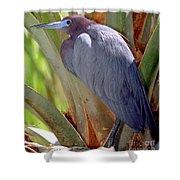 Little Blue Heron Male In Breeding Shower Curtain