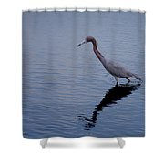 Little Blue Heron On The Hunt Shower Curtain