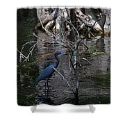 Little Blue Heron Shower Curtain by Skip Willits