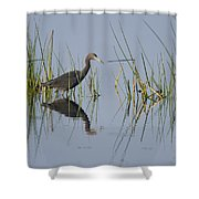 Little Blue Heron Wading Texas Shower Curtain