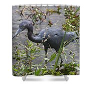 Little Blue Heron - Waiting For Prey Shower Curtain