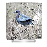 Little Blue In Rookery Louisiana Shower Curtain