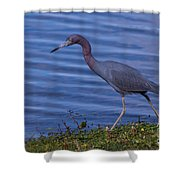 Little Blue Strut Shower Curtain