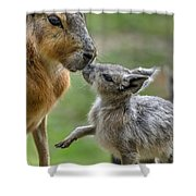 Little Cavy With Mother Shower Curtain