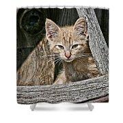 Little Charlie - Kitten By Wagon Wheel - Casper Wyoming Shower Curtain