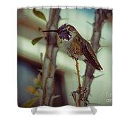 Little Costa's Hummingbird Shower Curtain