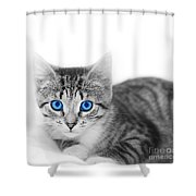 Little Cute Kitten. Space For Your Text Shower Curtain