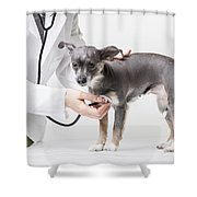 Little Dog At The Vet Shower Curtain
