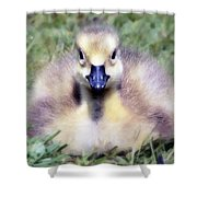 Little Duckling Shower Curtain