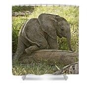 Little Elephant Big Log Shower Curtain