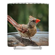 Little Feather Shower Curtain