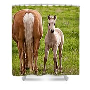 Little Foal Shower Curtain