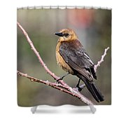 Little Grackle In A Big World Shower Curtain