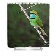Little Green Bee-eater  Merops Orientalis Shower Curtain