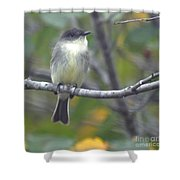Little Lady Eastern Kingbird Shower Curtain