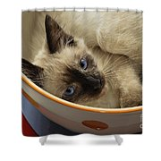 Little Miss Blue Eyes Shower Curtain by Andee Design