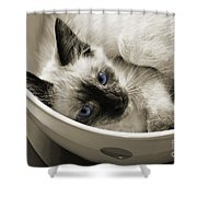 Little Miss Blue Eyes B W Shower Curtain by Andee Design