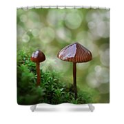 Little Mushroom Reflections Shower Curtain