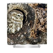 Little Owl 4 Shower Curtain