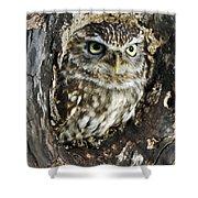 Little Owl 6 Shower Curtain