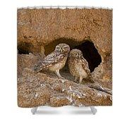 Little Owl Athene Noctua  Shower Curtain