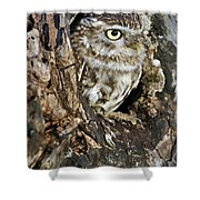Little Owl In Hollow Tree Shower Curtain