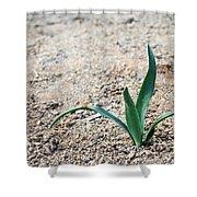Little Plant Shower Curtain