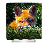Little Red Fox Shower Curtain