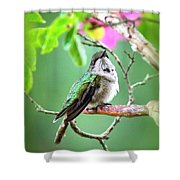 Little Ruby - 6763-001 Shower Curtain