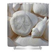 Little Sand Dollar And Seashells Shower Curtain