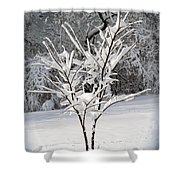 Little Snow Tree Shower Curtain by Karen Adams