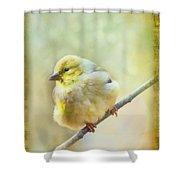 Little Softie Gold Finch - Digital Paint Shower Curtain