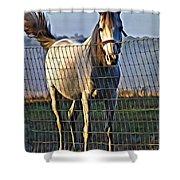 Little White Pony Shower Curtain
