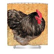 Live Chicken - 2011 Houston Livestock Show Shower Curtain