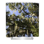 Live Oak Dripping With Spanish Moss Shower Curtain
