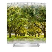 Live Oak Journey Paint Shower Curtain