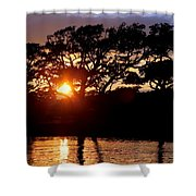 Live Oak Silhouette Shower Curtain