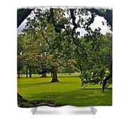 Live Oak Tree At Oak Alley Plantation Shower Curtain