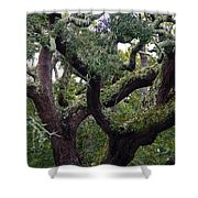 Live Oak Tree Shower Curtain