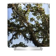 Live Oak Tree With Moss Shower Curtain