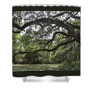 Live Oaks And Spanish Moss A Shower Curtain