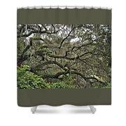 Live Oaks And Spanish Moss B Shower Curtain